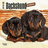 Dachshund Puppies - 2018 Mini Calendar Calendriers