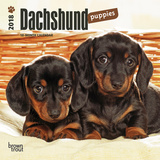 Dachshund Puppies - 2018 Mini Calendar Kalender
