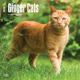 Ginger Cats - 2018 Calendar カレンダー