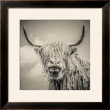 Highland Cattle Framed Photographic Print by Mark Gemmell