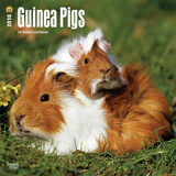 Guinea Pigs - 2018 Calendar Calendars