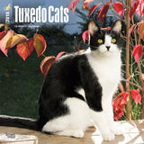 Tuxedo Cats - 2018 Calendar Kalenders
