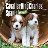 Cavalier King Charles Spaniel Puppies - 2018 Mini Calendar Calendriers