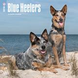 Blue Heelers - 2018 Calendar Calendars