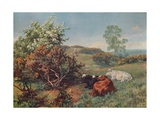 Landscape with Cattle (In the Nower, Dorking), c1899 Giclee Print by Charles Collins