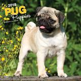 Pug Puppies - 2018 Calendar Calendriers