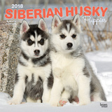 Siberian Husky Puppies - 2018 Calendar Calendars