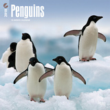 Penguins - 2018 Calendar Calendars
