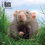 Rats - 2018 Calendar Calendriers