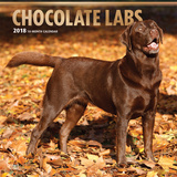 Chocolate Labrador Retrievers - 2018 Calendar Calendars