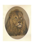 Lions Head, c1896 Giclee Print by Frank Paton