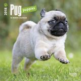 Pug Puppies - 2018 Mini Calendar Calendriers
