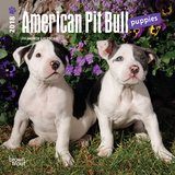 American Pit Bull Terrier Puppies - 2018 Mini Calendar Calendars