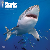 Sharks - 2018 Calendar Calendars
