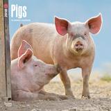 Pigs - 2018 Calendar Calendários
