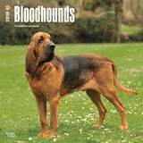 Bloodhounds - 2018 Calendar Calendars