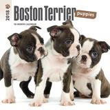 Boston Terrier Puppies - 2018 Mini Calendar Calendarios