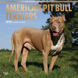 American Pit Bull Terriers - 2018 Calendar Calendars