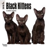 Black Kittens - 2018 Mini Calendar Kalenders