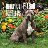 American Pit Bull Terriers - 2018 Mini Calendar Kalenders