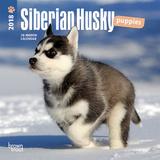 Siberian Husky Puppies - 2018 Mini Calendar Kalendere