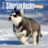Siberian Husky Puppies - 2018 Mini Calendar Calendarios