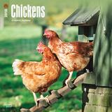 Chickens - 2018 Calendar Calendars