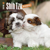 Shih Tzu Puppies - 2018 Mini Calendar Calendars