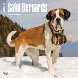 Saint Bernards - 2018 Calendar Kalenders
