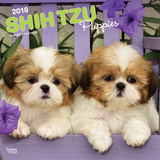 Shih Tzu Puppies - 2018 Calendar Calendars