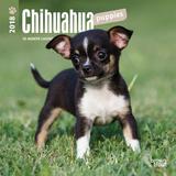 Chihuahua Puppies - 2018 Mini Calendar Calendriers