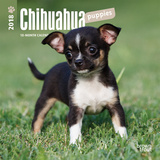 Chihuahua Puppies - 2018 Mini Calendar Kalendere