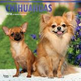 Chihuahuas - 2018 Calendar Calendars