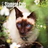 Siamese Cats - 2018 Calendar Calendars