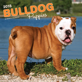 Bulldog Puppies - 2018 Calendar Calendars