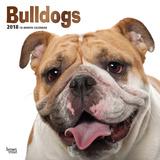 Bulldogs - 2018 Calendar Kalenders