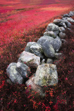 An Old Stone Wall Divides a Blueberry Barren in Maine Photographic Print by Robbie George
