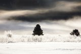 One Tree Remains Untouched from the Winter Frost That Clings to All Photographic Print by Robbie George