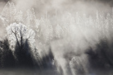 Winter Mist Is in a Forest Photographic Print by Robbie George