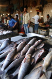 Fish for Sale at a Local Market in Mumbai Photographic Print by Jill Schneider
