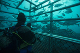 Schools of Fish Swim around a Shark Cage in Waters Off the Neptune Islands Photographic Print by Brian Skerry