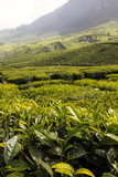 Scenic View of the Tea Plantations in Munnar Photographic Print by Jill Schneider