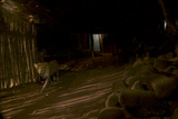 A Remote Camera Captures a Leopard Walking in Mumbai's Aarey Milk Colony Neighborhood Photographic Print by Steve Winter