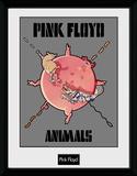 Pink Floyd - Animals Lámina de coleccionista