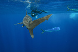 A Photographer Takes Images of an Oceanic Whitetip Shark Swimming in the Bahamas Photographic Print by Brian Skerry
