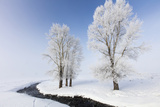 Frost Covered Trees Sit Near a Stream Bank Photographic Print by Robbie George