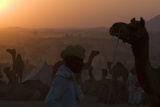 Silhouetted Dromedary Camels at Dusk at the Pushkar Camel Fair Photographic Print by Steve Winter