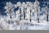 Frost Clings to Grass and Branches after a Recent Storm Photographic Print by Robbie George
