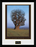 Pink Floyd - Tree Collector Print