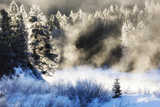 Mist Rises from Amongst a Stand of Frozen Pines Photographic Print by Robbie George